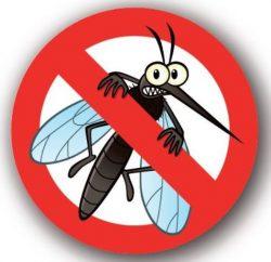 zanzara1 54 1131